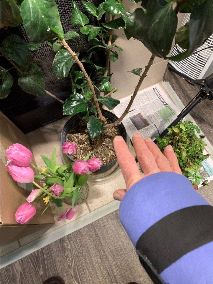 Saving the Plants and Mending My Wrist 😊 Record Winter Storm Valentines Day 2021 Austin Texas ©Felipe Adan Lerma