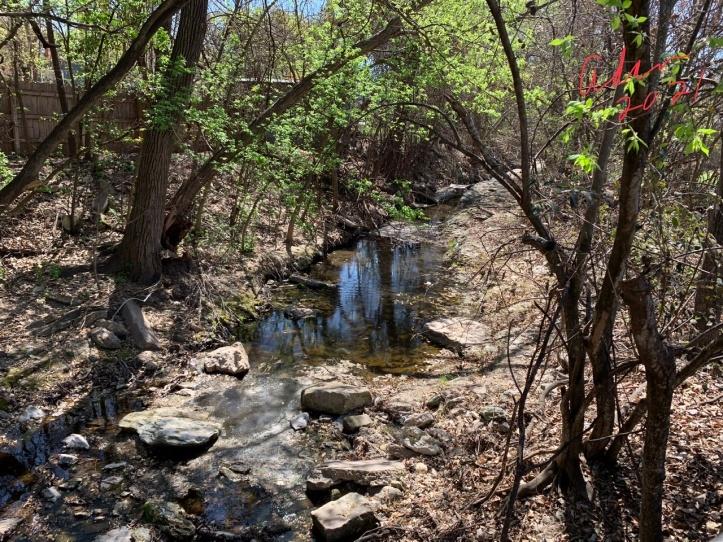 East Bouldin Creek Austin Texas 03.20.21 ©Felipe Adan Lerma