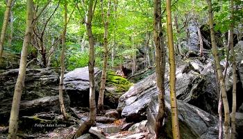 Rocks at Smugglers Notch ©Felipe Adan Lerma https://felipeadan-lerma.pixels.com/featured/image-included-in-queen-the-novel-rocks-at-smugglers-notch-enhanced-felipe-adan-lerma.html