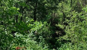 Random (sorta) Pic of the Day 05.05.21 ©Felipe Adan Lerma Urban Forest Austin Texas