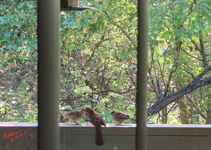 Random (sorta) Pic of the Day 05.15.21 ©Felipe Adan Lerma Bird Friends at Our Balcony