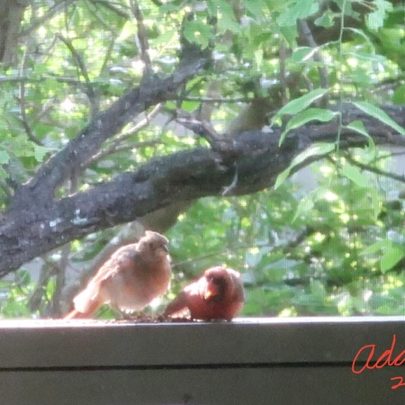 Random (sorta) Pic of the Day 05.14.21 ©Felipe Adan Lerma First Bird to Visit Our New Balcony Brings a Friend