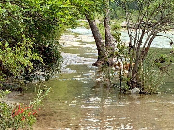 Small dog enjoying the water in Barton Creek 06.08.21 ©Felipe Adan Lerma