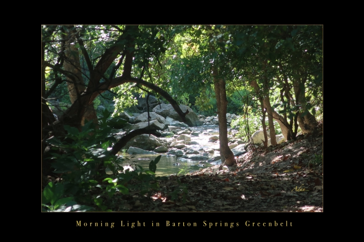 Morning Light in Barton Springs Greenbelt, Austin Texas Poster @Felipe Adan Lerma https://felipeadan-lerma.pixels.com/featured/morning-light-in-barton-springs-greenbelt-austin-poster-felipe-adan-lerma.html