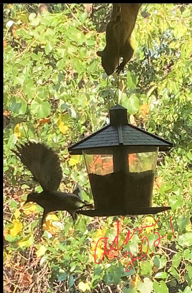 Bird & Squirrel on the feeder 09.09.21 ©Felipe Adan Lerma
