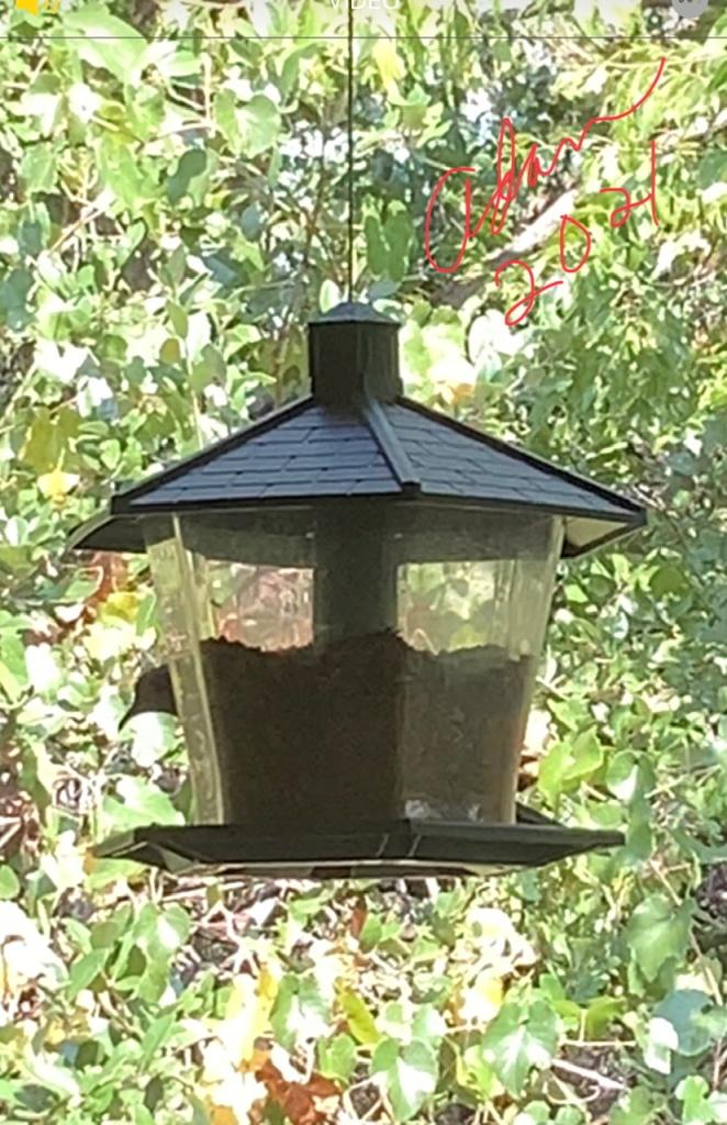 Bird on the feeder 09.09.21 ©Felipe Adan Lerma